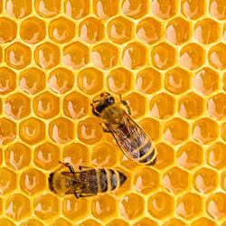 Análisis de la miel y de los productos apícolas como el propóleos, la jalea real y la cera de abeja